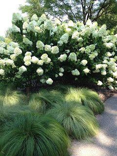 Carex_morrowii_%27Silk_Tassel%27.jpg