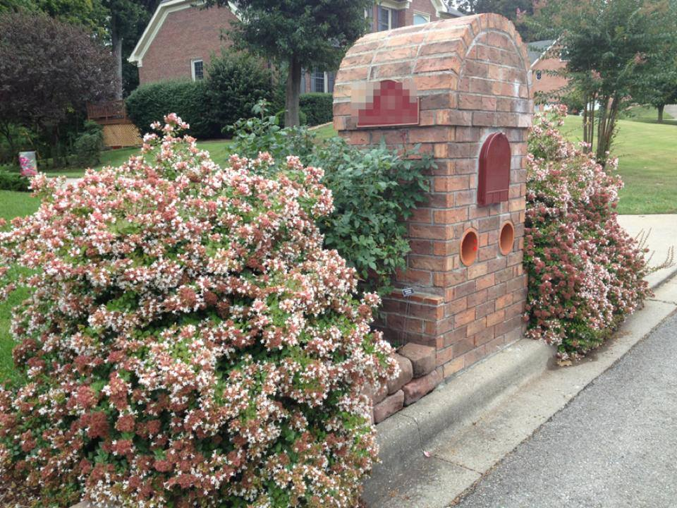 Abelia X Rose Creek Rose Creek Abelia Gardenhood Plantlist